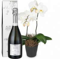 White Dream (Orchidee) mit Prosecco Albino Armani DOC (75cl)